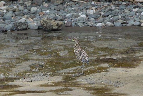Drake Bay, Kostaryka: ave