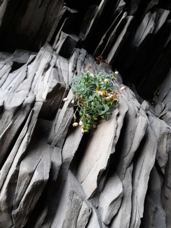 Black Sand Beach: This wonderful plant clinging on in a world of black.