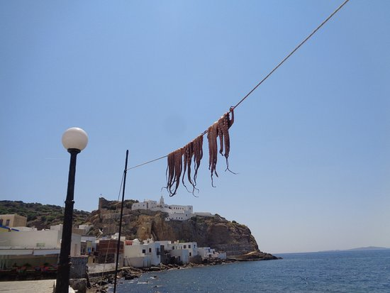 Mandraki, Griechenland: ośmiornice wiszą!