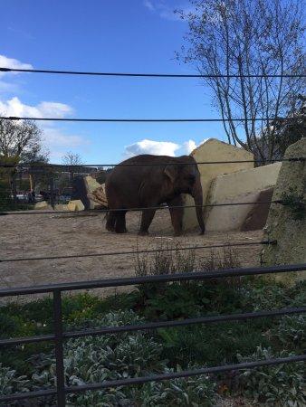 Artis zoo amsterdam animals