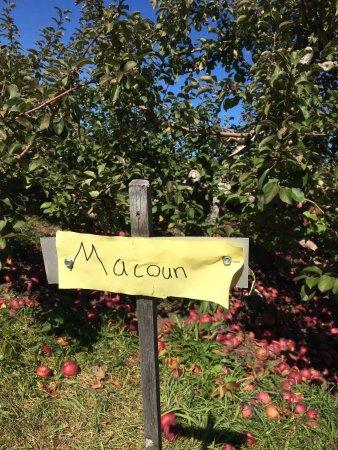 Stow, MA : photo4.jpg