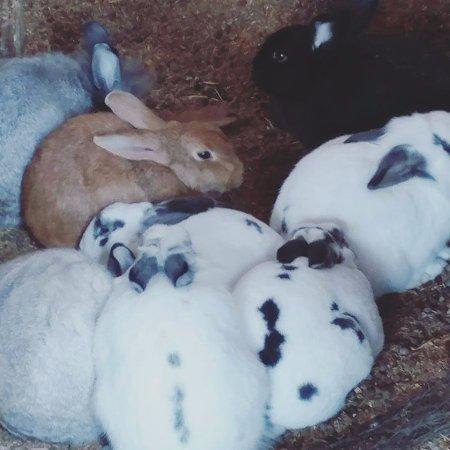 Clarkesville, GA: Bunnies!