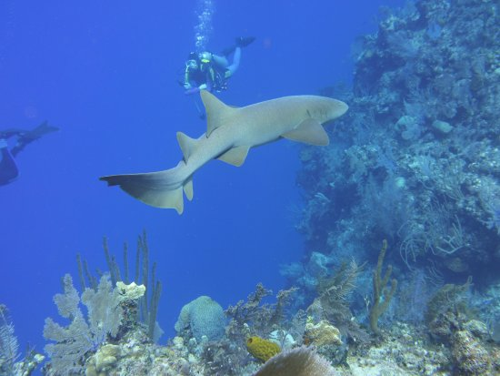 Pirates Point Resort: Nurse Shark