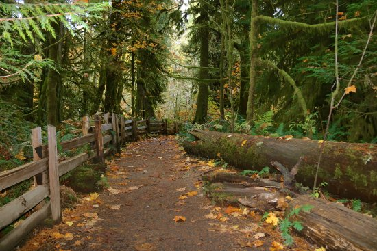 Cathedral Grove: Walkways
