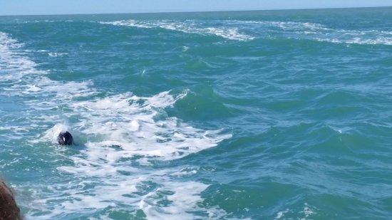 Puerto Rawson, الأرجنتين: toninas