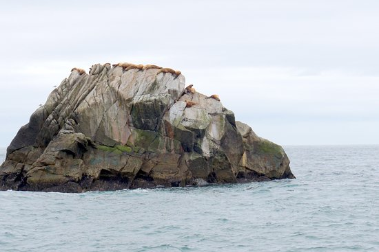 Kenai Fjords Tours: focas e leões marinhos descansando em uma ilhota