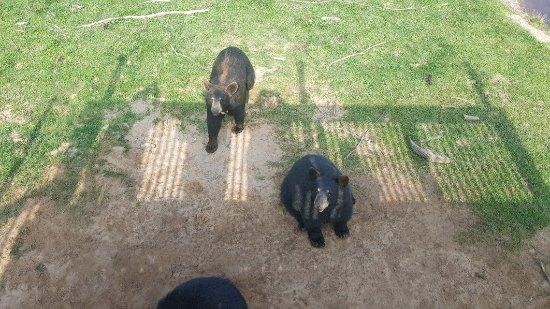 Oswald's Bear Ranch: 20170825_110442_large.jpg