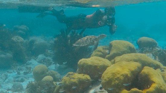 Kralendijk, Bonaire: Klein Bonaire Snorkeling trip
