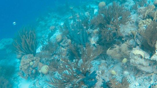 Kralendijk, Bonaire: reef with a huge drop off