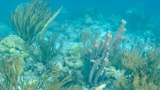 Kralendijk, Bonaire: more reef and sponges, fish variety