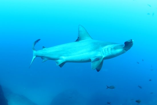 an introduction to the review of the trip to cocos island Guide to diving cocos island & malpelo, howard hall's island of the sharks,   strong currents and low vis, cocos island can be the apex dive trip of your dive.