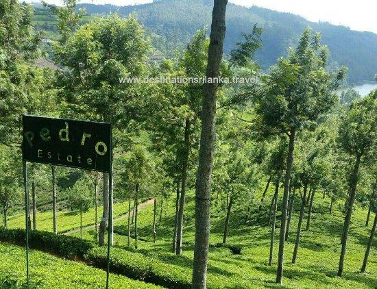 Destination Sri Lanka: Pedro Tea Plantation Nuwara Eliya