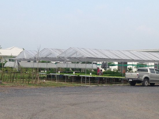 Pathum Thani, Thailand: the vegetable garden to have all year fresh vegetable
