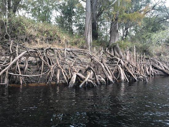 Mayo, Flórida: Suwannee River Rendezvous Resort & Campground