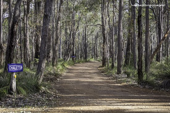 Metricup, Australien: The Karri Trees
