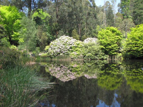 National Rhododendron Gardens: Reflections on the pond.