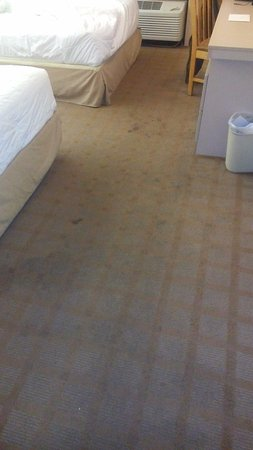 Microtel Inn & Suites by Wyndham Nashville: Dirty worn and STAINED carpets throughout