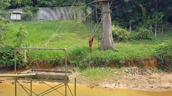 Semanggol, Malásia: 20171114_111129_large.jpg