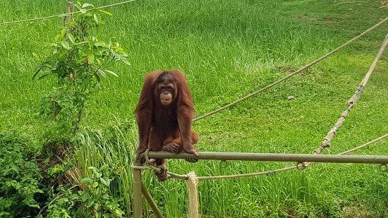 Semanggol, Malásia: 20171114_111307_large.jpg