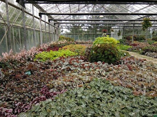 Cianjur, Indonésie : Taman Bunga Nusantara