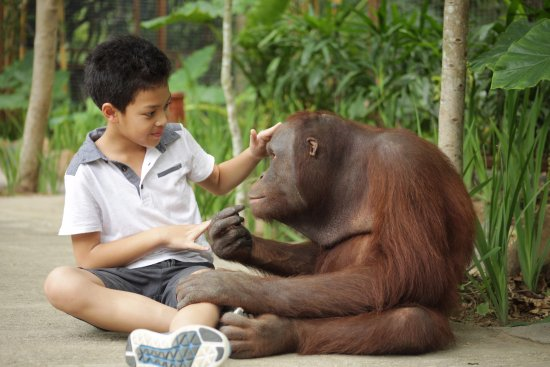 Tanjung, Indonesia: Valent, our friendly orang utan