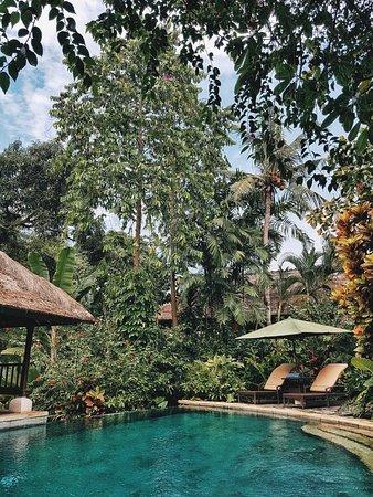 Plataran Canggu Resort & Spa: 2017-11-06 11_large.jpg