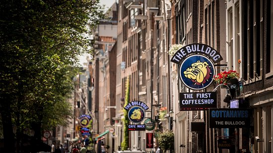 ‪The Bulldog Amsterdam‬