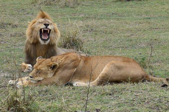 Meru Slopes Tours Safaris