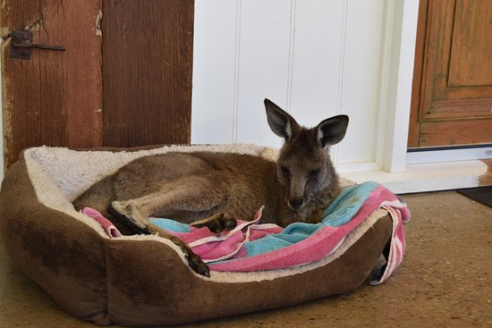 Hay, Australia: Little Roo.