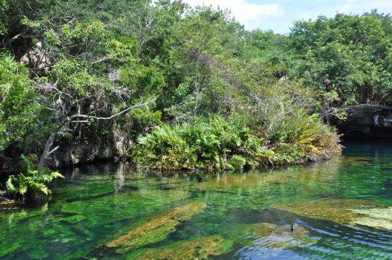 Cenote Jardin del Eden: Le cenote