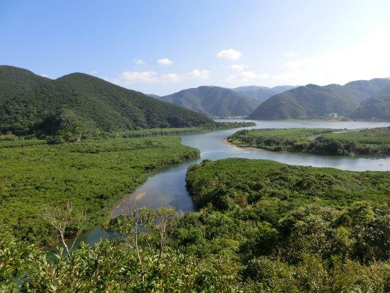 Mangrove Primeval Forest