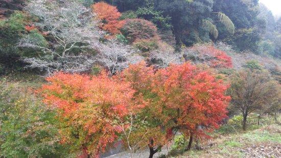 Obara Fureai Park / Shikizakura