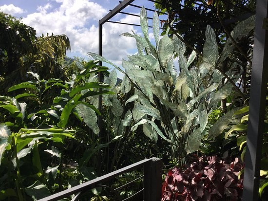 Glass Foliage blended with Tropical planting - Picture of Art and ...