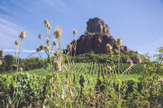 Solutre-Pouilly, France: la roche vue d'en bas