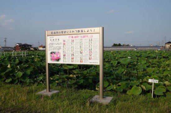 Aisai Photo
