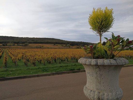 Marsannay-la-Cote, France : Vue extérieure sur les coteaux - Château de Marsannay
