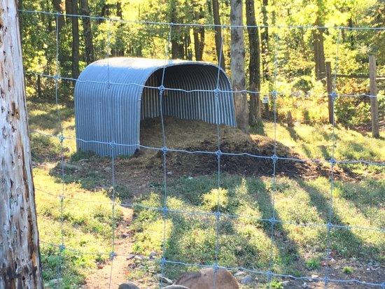 Kingwood, Virginia Occidental: the goat's shelter is full of feces