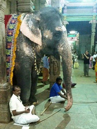 Templo de Sri Meenakshi: IMG-20171112-WA0018_large.jpg