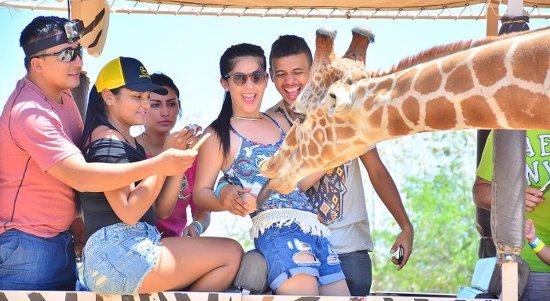 Playa Hermosa, Costa Rica: Safari Tour: Africa Mia