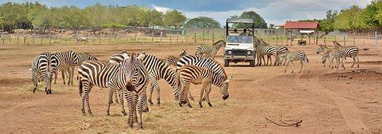Playa Hermosa, Costa Rica: Safari Tour Africa Mia
