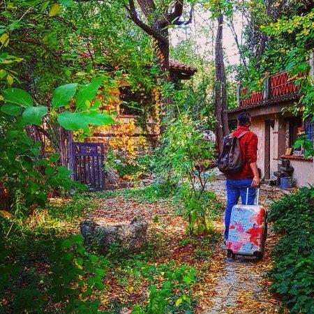 Navaconcejo, Spain: casita con su frondosa vegetación