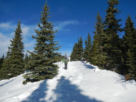 Bragg Creek, Canada: Even in the wind, the treed area are fine