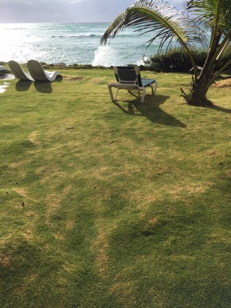 Ocean Spray Beach Apartments: Worlds softest grass
