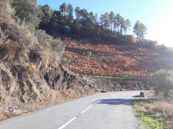 Sabrosa, Portugal: 20171114_152508_large.jpg