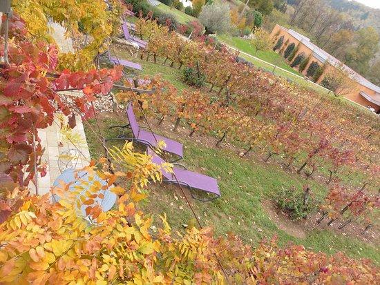 Tour-de-Faure, Francia: Vue sur les vignes, les jolis transats et le spa