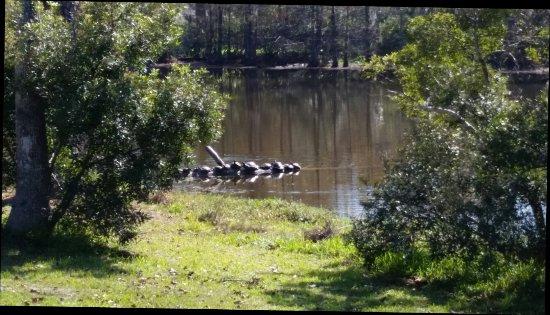Sam Houston Jones State Park: 20171114_122400_large.jpg