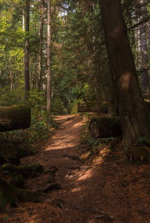 Roberts Creek, Canada: One of the trails at Cliff Gilker
