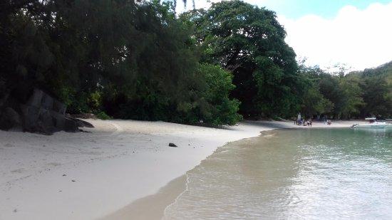 Port Glaud, Seychellerna: Пляж под деревьями