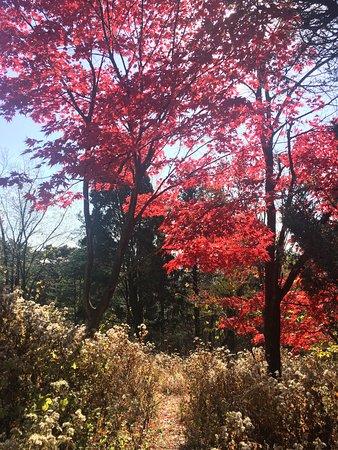 Gwangju, Corée du Sud : photo2.jpg