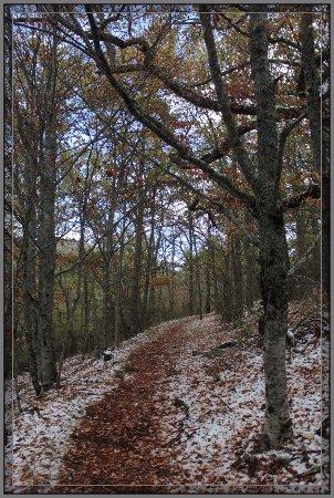 Montejo de la Sierra, Espanha: Imágenes del Hayedo